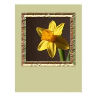 Spring Daffodil Postcard