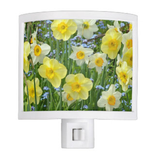 Spring daffodils nite lite
