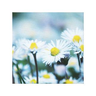 Spring daisy flower canvas print