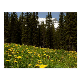 Spring Dandelions Flowers Near Lake Louise Banff N Postcard