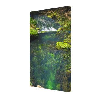 Spring Deep Canvas Print