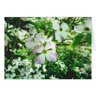 Spring Dogwood Card