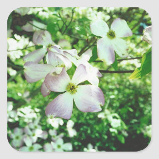 Spring Dogwood Square Sticker