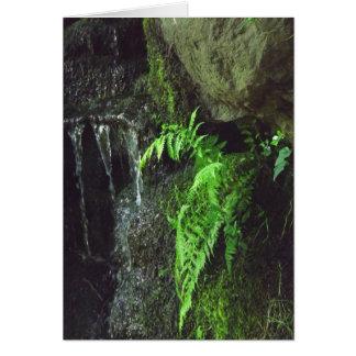 Spring Fern Card