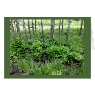 Spring Ferns In Wisconsin Blank Note Card