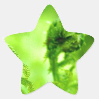 Spring Fiddleheads Star Sticker