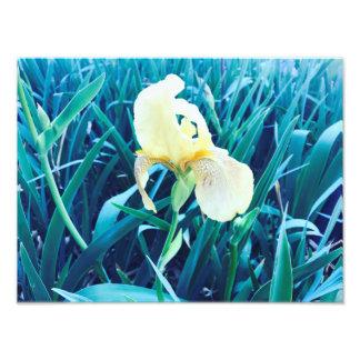 Spring Flower Photo Print