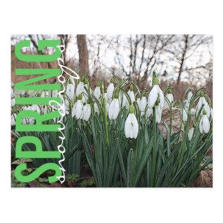 Spring flowers, floral white snowdrops postcard
