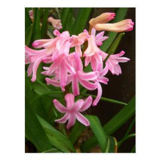 """Spring Flowers of Staten Island""  CricketDiane Ar Postcard"