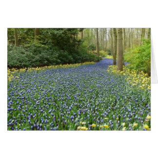Spring flowers - River of Hyacinths Card