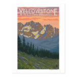 Spring Flowers - Yellowstone National Park Postcard