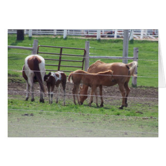 Spring Foals, New Birth New Hope Card