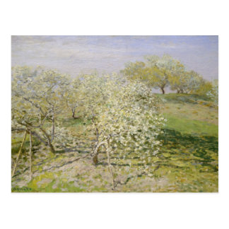 Spring Fruit Trees in Bloom Postcard