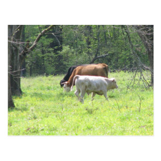Spring Grazing in Louisiana Postcard