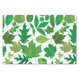 Spring Green Leaves on White Tissue Paper