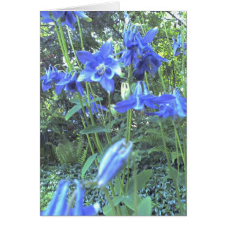 Spring growing columbines card