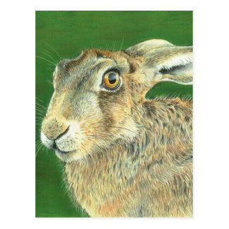 Spring Hare Postcard
