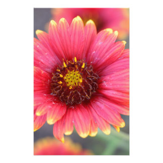 Spring in Bloom Customized Stationery