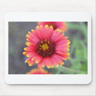 Spring in Bloom Mouse Pad