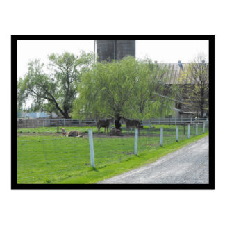 ~ Spring in Lancaster County ~ 36 Postcard