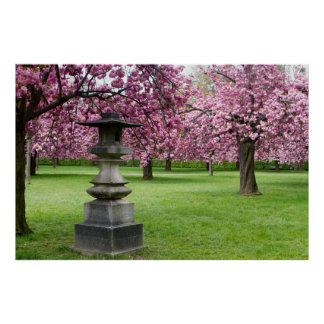 Spring in Paris Cherry Blossoms Poster