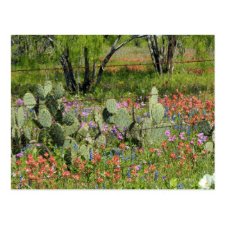Spring in Texas Postcard