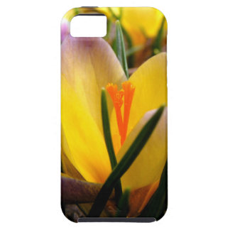 Spring in the air, Crocus are blooming! iPhone 5 Case
