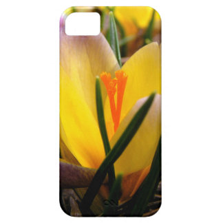 Spring in the air, Crocus are blooming! iPhone 5 Covers
