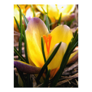 Spring in the air, Crocus are blooming! Letterhead