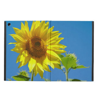 Spring is here! - Springtime sunflowers Case For iPad Air