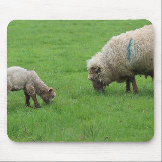 Spring Lamb and Sheep Mouse Pad