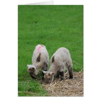 Spring Lambs Card