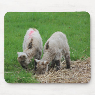 Spring Lambs Mouse Pad