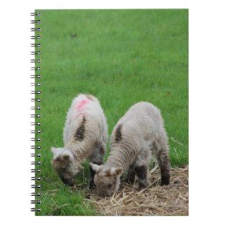 Spring Lambs Notebook