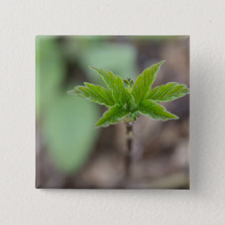 Spring Leaves 2 Inch Square Button
