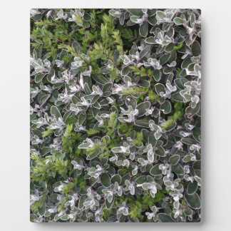 spring leaves of bushes in the park nature pattern photo plaque