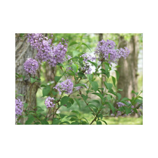 Spring Lilacs Stretched Canvas Print