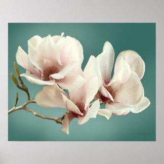 Spring Magnolia blossom, pink, soft  teal Poster
