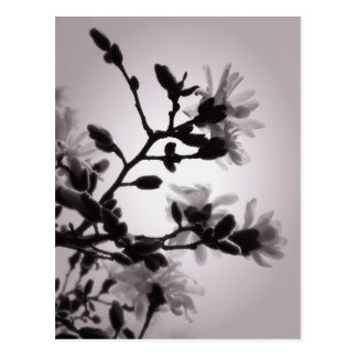 Spring Magnolia Postcard