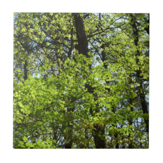 Spring Maple Leaves Green Nature Tile