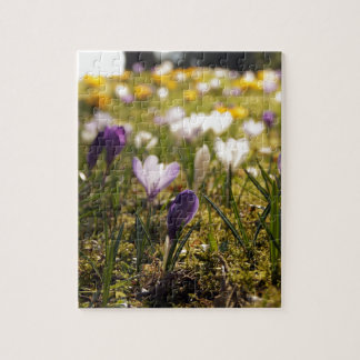 Spring meadow with crocus in the back light puzzle