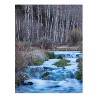 Spring Melt Off Flowing Down From Bonanza Postcard