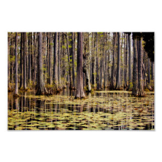 Spring on Cypress Swamp Poster