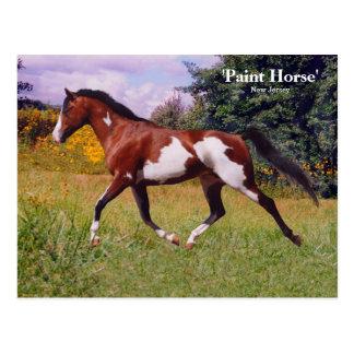 Spring Paint Horse Postcard
