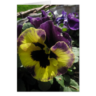 Spring Pansy Card
