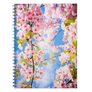 Spring Pink Cherry Blossoms Nature Photo Notebook