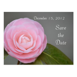 Spring Pink Rose Save the Date Postcard