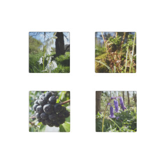Spring Plants Stone Magnet Set