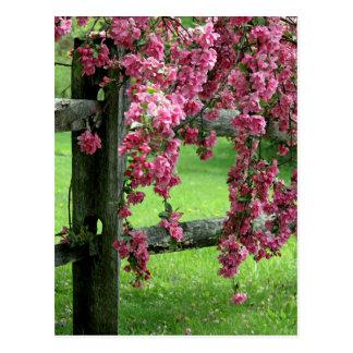 Spring Postcard
