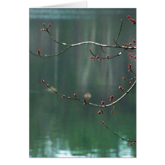 Spring Red Buds Reflections Note Card